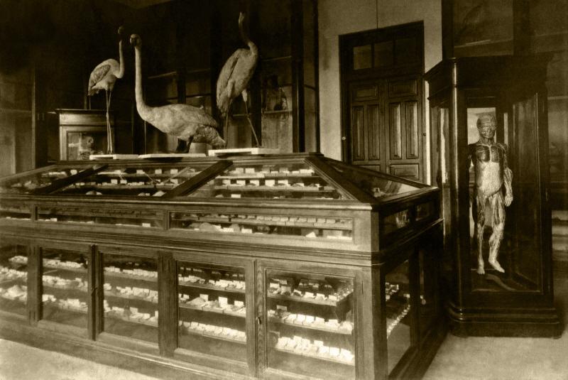 Gabinete de Historia Natural. 1917